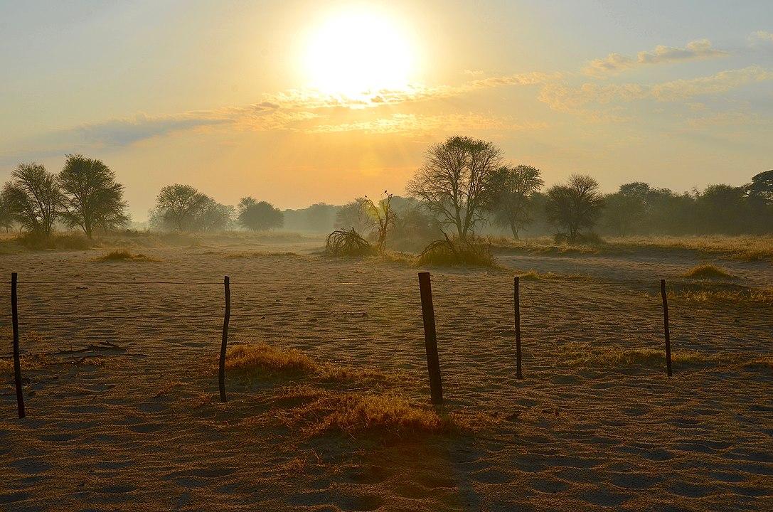 Morning - by Olga Ernst